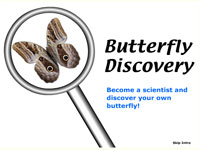 Butterfly Discovery